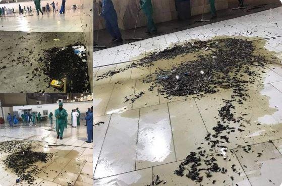 Photo of هيئة دولية:فشل أنظمة الصرف الصحي بمحيط الحرمين ساهم في غزو أسراب الحشرات