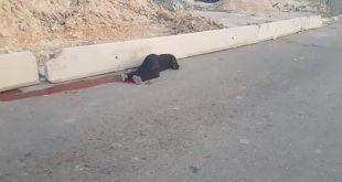 السيدة الفلسطينية التي استشهدت برصاص قوات الاحتلال في القدس