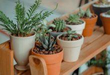 Photo of كيف تقوم النباتات المنزلية بتنقية الهواء؟!