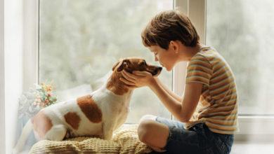 تربية الحيوانات الأليفة عند الأطفال