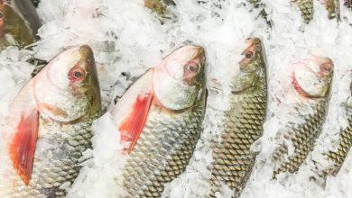 Photo of طرق آمنة وسريعة لإذابة السمك المجمد