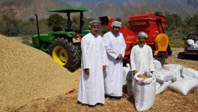 صورة سلطنة عمان تحقق ارتفاعًا في إنتاج القمح