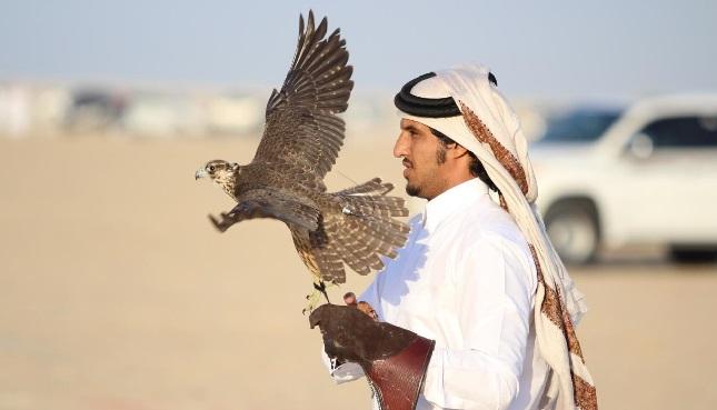 مهرجان قطر الدولي للصقور والصيد يستضيف رواده للعام الـ11على التوالي