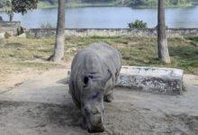 أنثى وحيد القرن