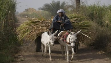 صعيد مصر الفقير.