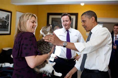 """القط """"لاري"""""""