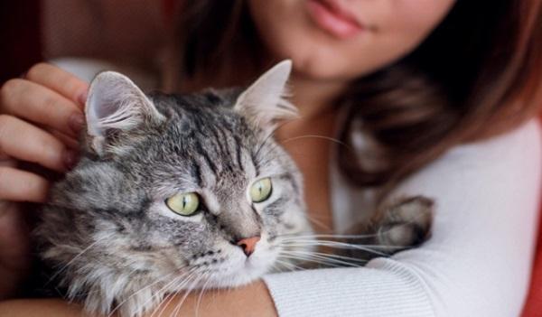 قطة تعود بعد 15