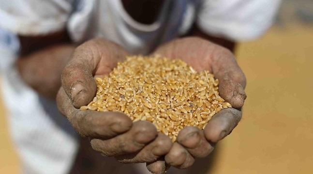 آلاف الأطنان من حبوب القمح من أمريكا للسودان
