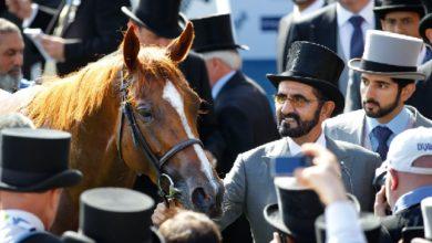 مطالبات بمنع خيول محمد بن راشد من دخول سباق