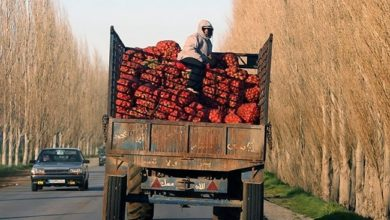 الفاكهة اللبنانية لا تجد طريقها للتصدير نحو أهم أسواقها