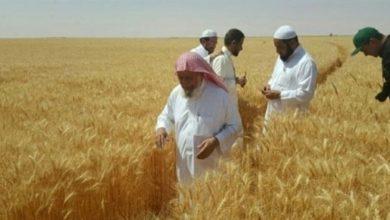 الرياض تدرس بيع صوامع القمح