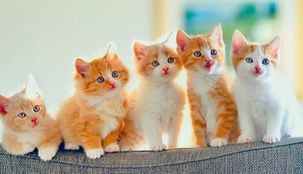 القطط