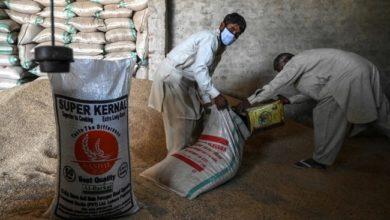 معركة بين الهند وباكستان بشأن ملكية الأرز البسمتي
