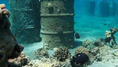 صفقة النفط السرية بين إسرائيل والإمارات تهدد البيئة البحرية