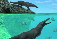 الحيتان البرمائية