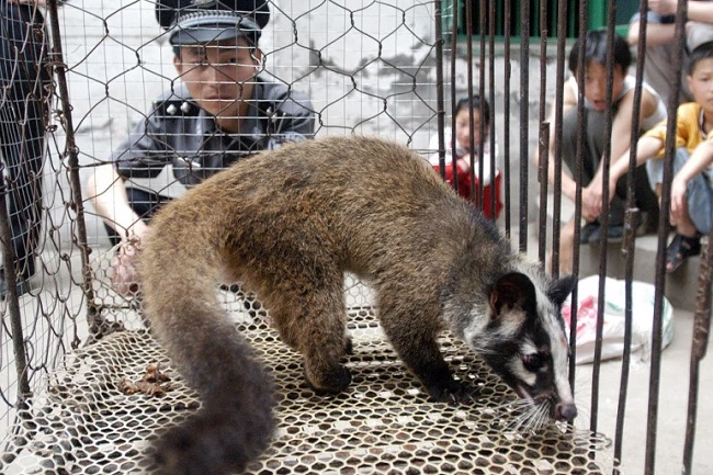 ووهان الصينية تسلط الضوء على إشراف البلاد على استخدام الحياة البرية